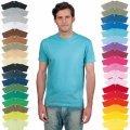 T-Shirt_Regent_